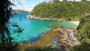 How to have an island holiday in NZ