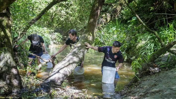 Jono Galuszka, right, joining a team from Horizons Regional Council in searching for kākahi, or freshwater mussel, in a stream off the Pahīatua Track road.