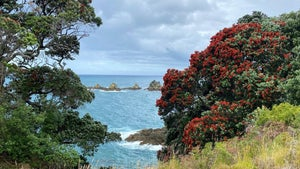 Tiritiri Matangi: The laid-back island for the birds