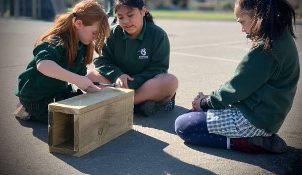 KEA Kids News: Native birds back after school's rat trapping programme