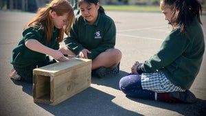 Native birds back after school's rat trapping programme