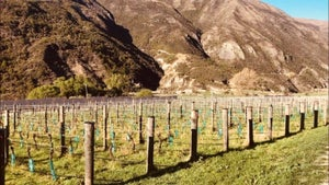 Central Otago: Luxury and relaxation among the vines