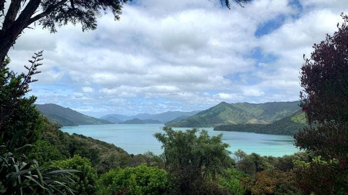 The primary role of conservation authorities should be to protect nature above all else, advocates say. Pictured: Marlborough Sounds