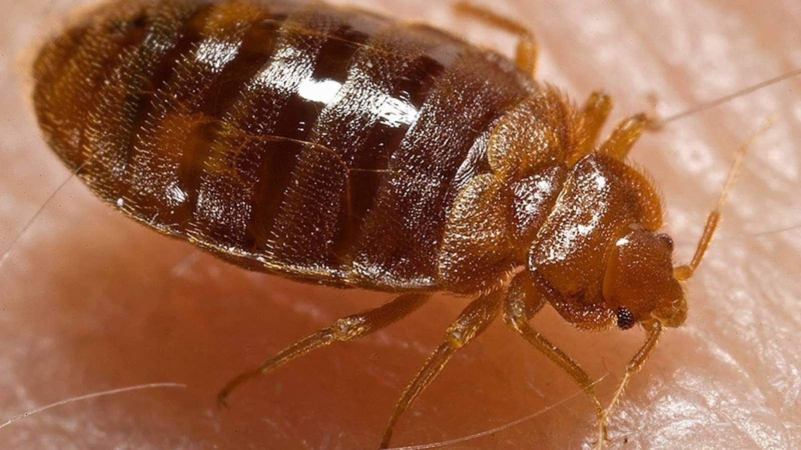 Horror at bed-bug infested DOC hut