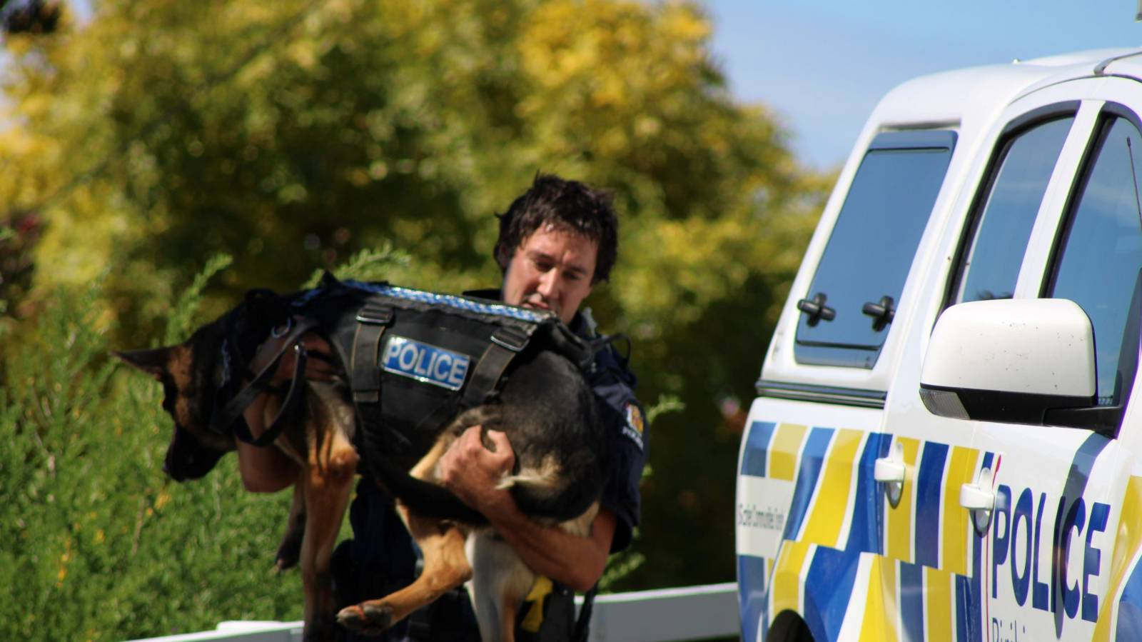 Police dogs carried to safety after fleeing driver hits police car