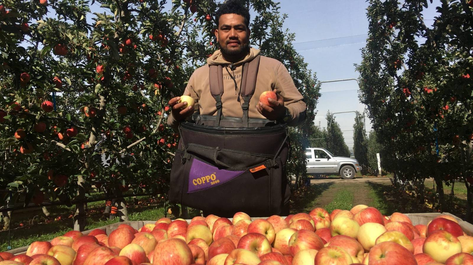 Orchardists welcome extra Pacific Island workers