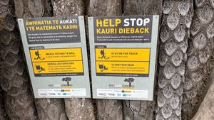 Northland tracks close to help stop kauri dieback