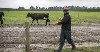 A recent application for a class border exception for the dairy sector was turned down by the Government. (File photo)