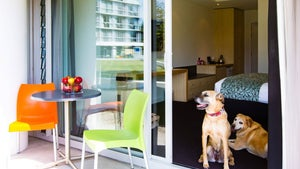 Three of the best dog-friendly hotels
