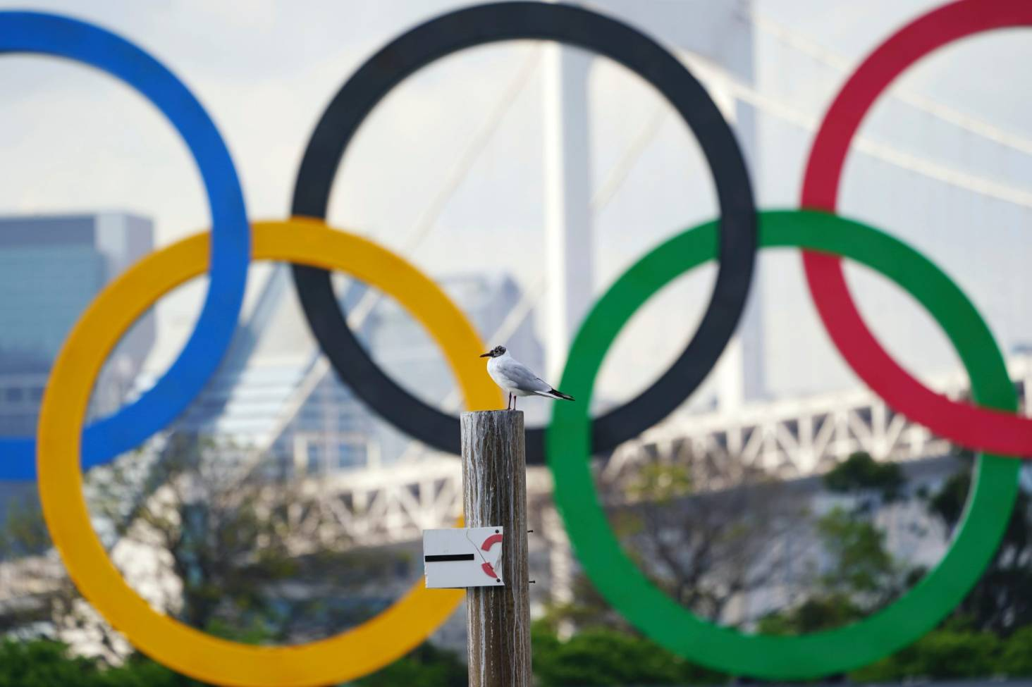 Sex Olympic Games