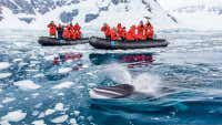 Tourism in Antarctica is booming, but it's a complicated relationship