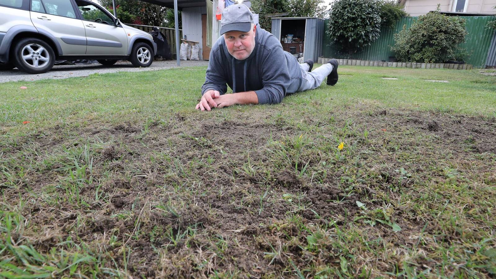 Gardeners are at their wit's over major grass grubs infestation