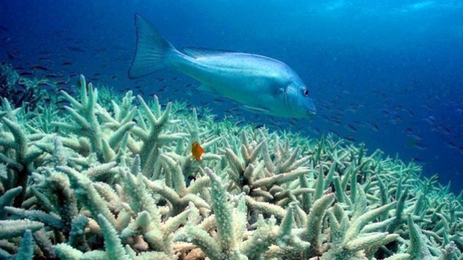 Outlook for coral reefs is grim — unless we cut emissions fast