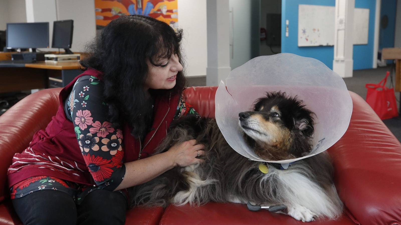 Tough times and $25k in surgeries for Dolly the collie