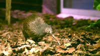 Why native animals are just the start of Kiwi North's attractions