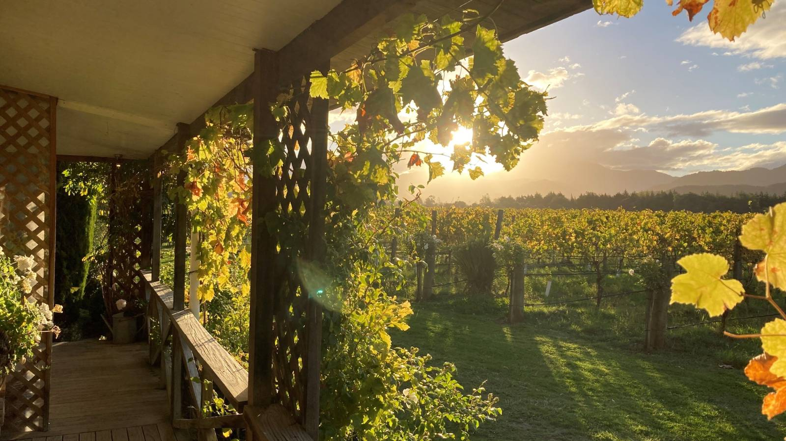 This vineyard cottage is as Marlborough as it comes