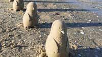 Sand penguins appear on Australian beach