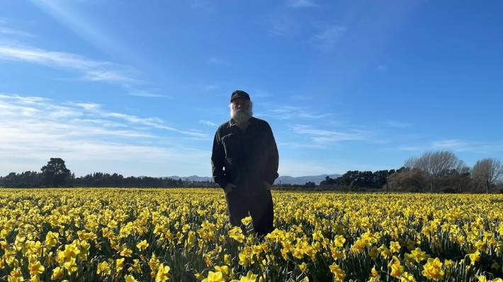 Daffodil grower John Chamberlain says he's lost a whole year's work due to the timing of lockdown with Daffodil Day on Friday.