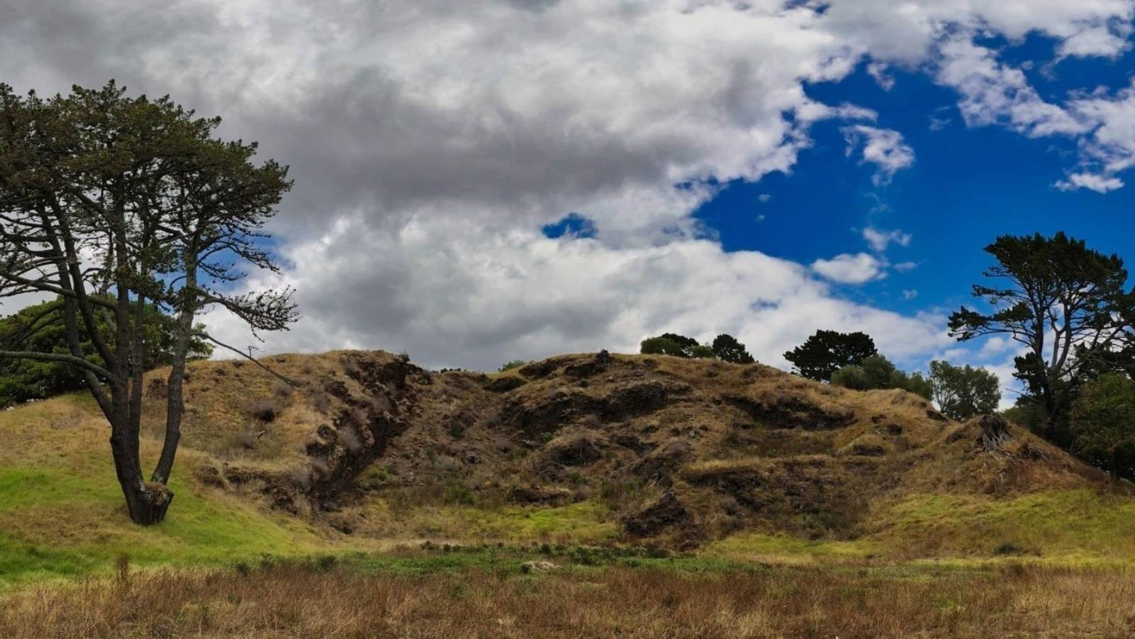 Ōtāhuhu woman plans to protest tree removal plans