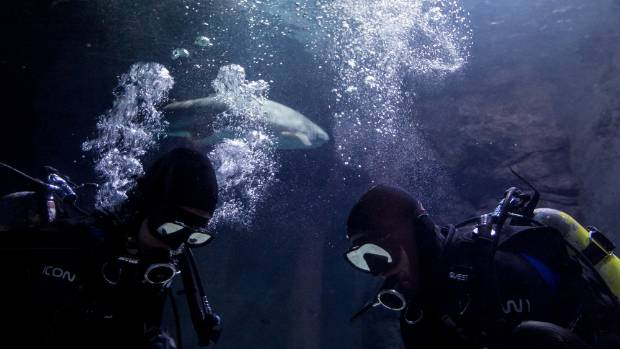 WET WORK: Kelly Tarlton's staff will serve as stewards of the first Xbox One to be sold worldwide - and sharks will be ...