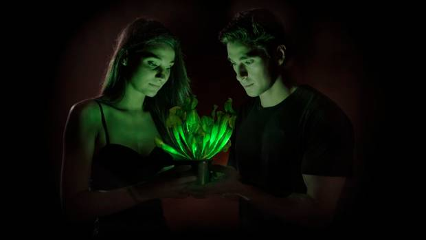 THE FUTURE: The alien greenish glow researchers at Bioglow aim to achieve as they learn to enhance the light-emitting ...
