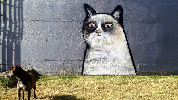 VIRAL? Grumpy Cat is known all over the world and her visage has popped up in a surprising amount of places.