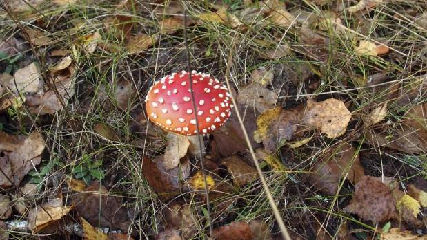 A mushroom in the forest near Novoshepelychi, an abandoned village in the Chernobyl Nuclear Power Plant exclusion zone